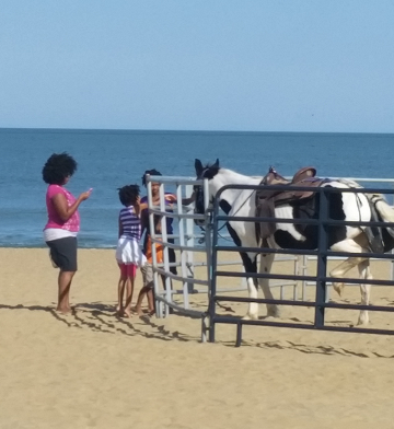 BeachHorsePetting