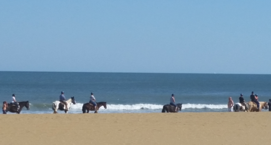 BeachHorseRides